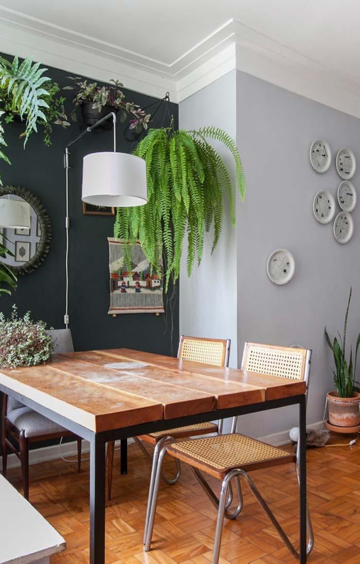 Samambaias valorizam ambientes de aparência rústica