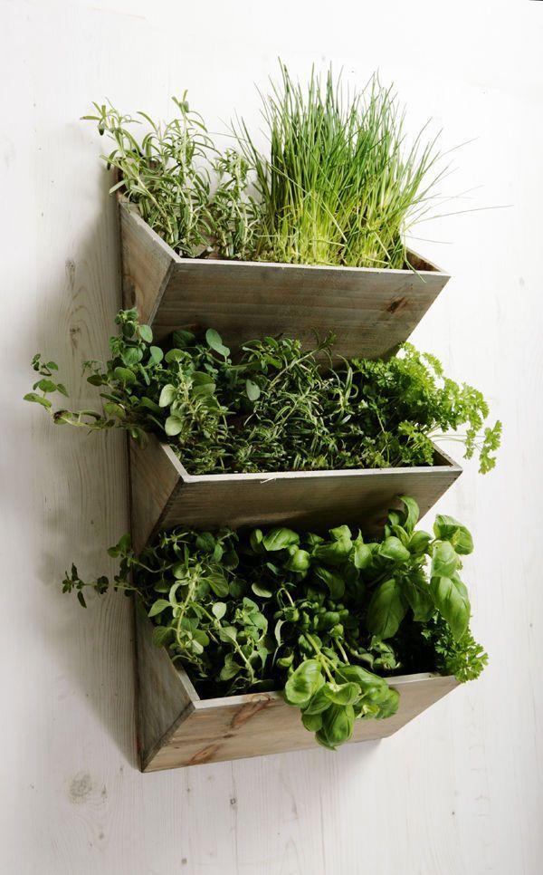 Horta vertical na parede