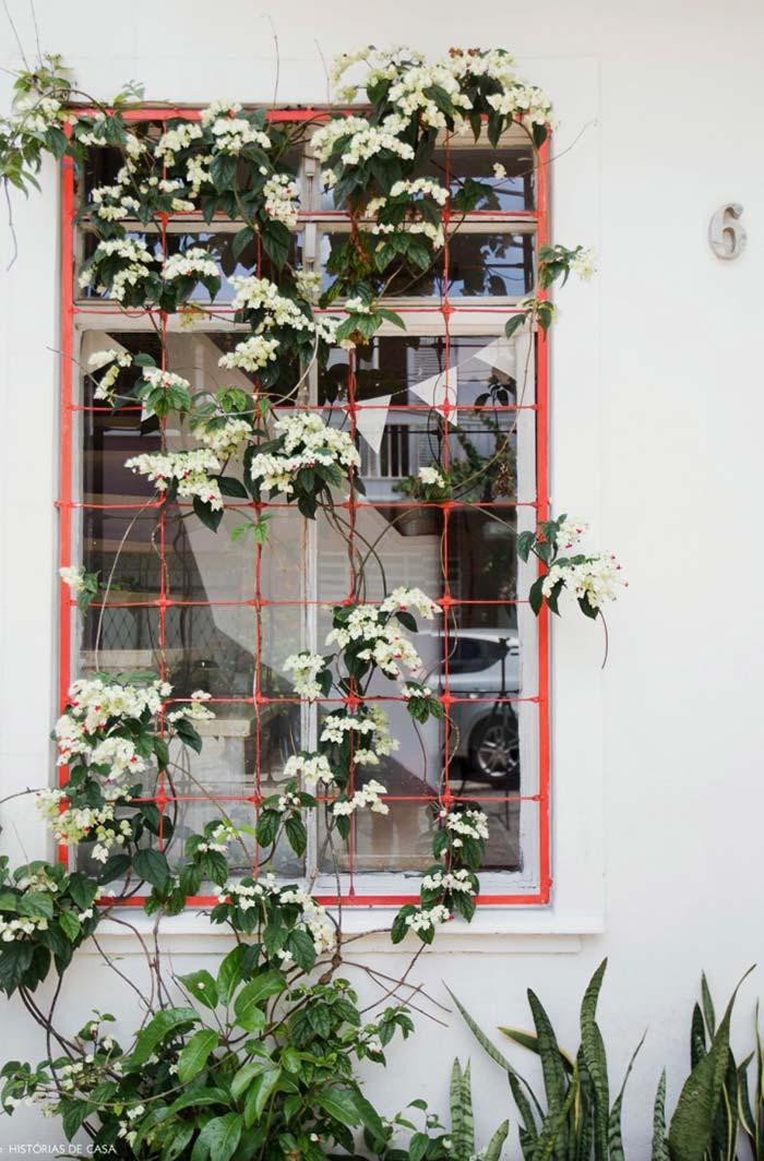 Estrutura da grade para janela aproveitada para pendurar plantas