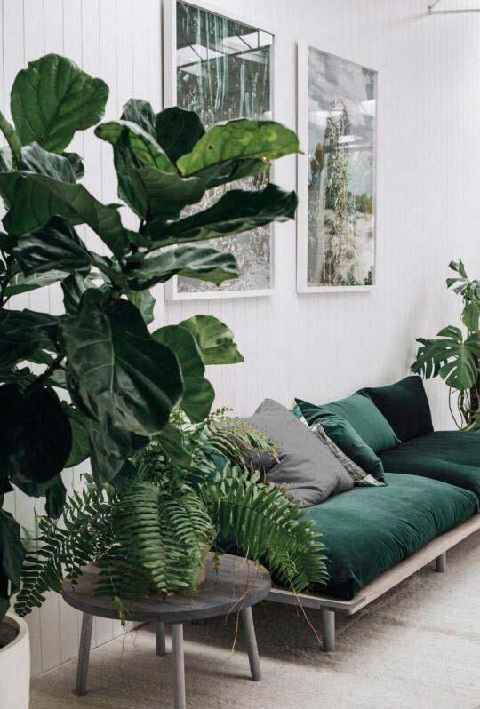 Plantas da moda compõem a decoração dessa sala