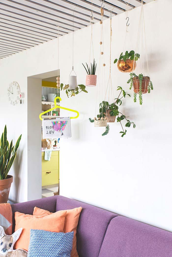 Plantinhas suspensas no teto