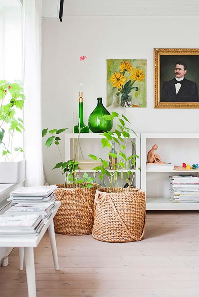 Adapte o tamanho da vaso para o tamanho da planta