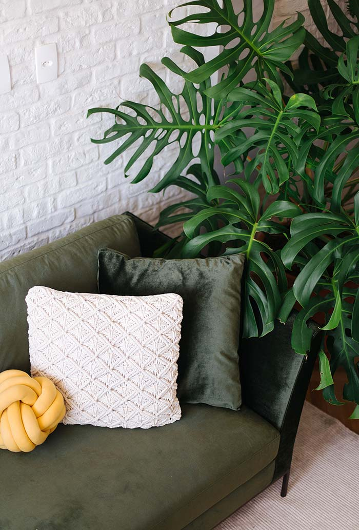Plantas para sala: Costela de Adão