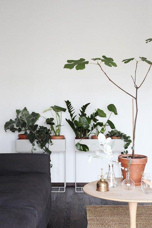 Plantas longe da janela