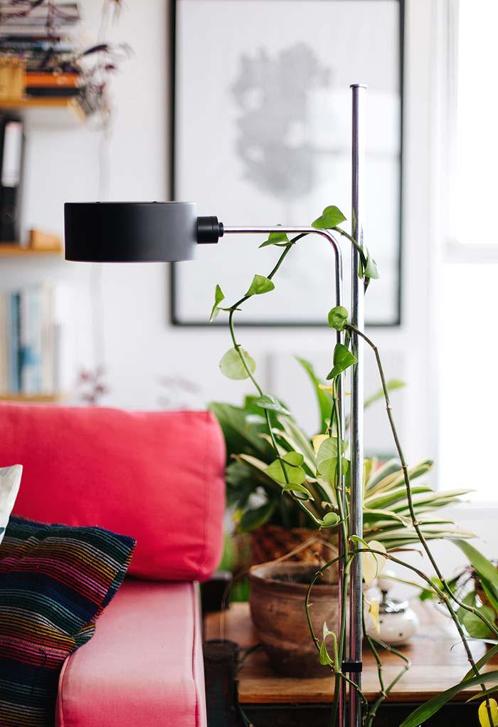 Plantas para sala: jiboia