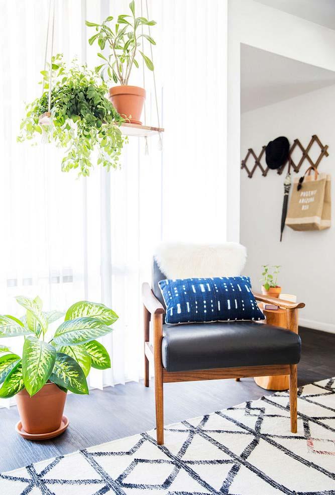 Plantas para sala na balança