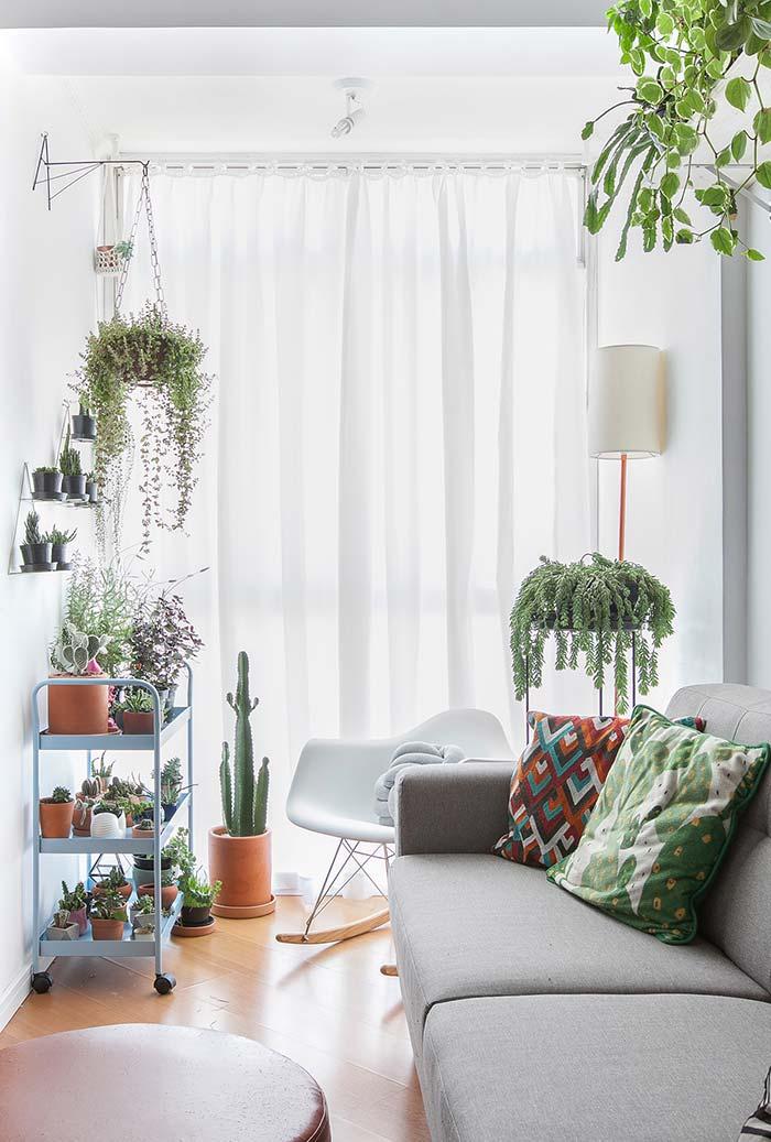 Planta para sala perto da janela
