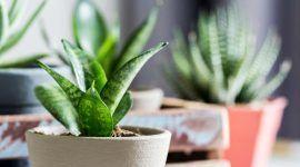 Plantas para sala: principais espécies e dicas de decoração com fotos