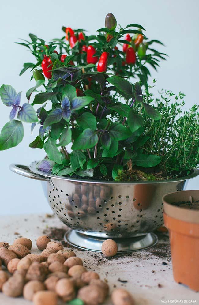 Horta caseira em escorredor de inox