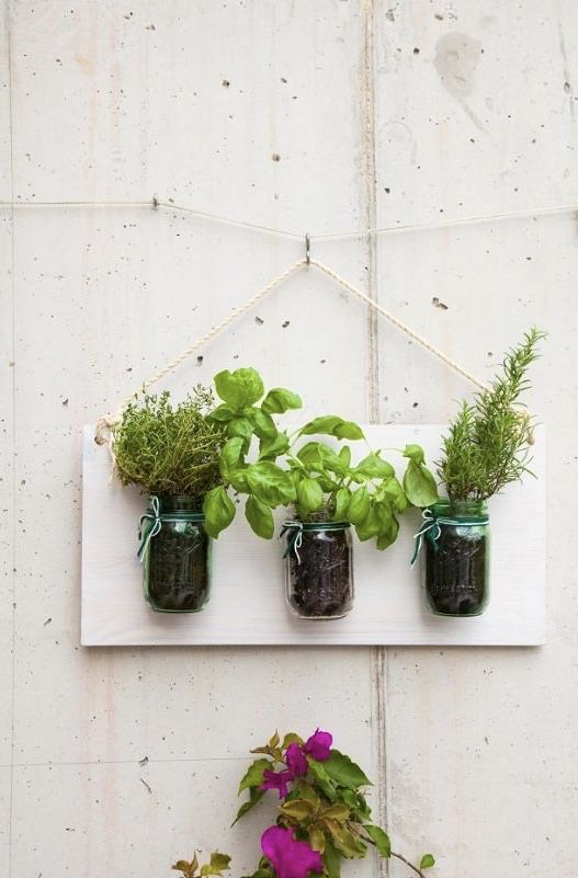 Horta caseira com jarros na parede