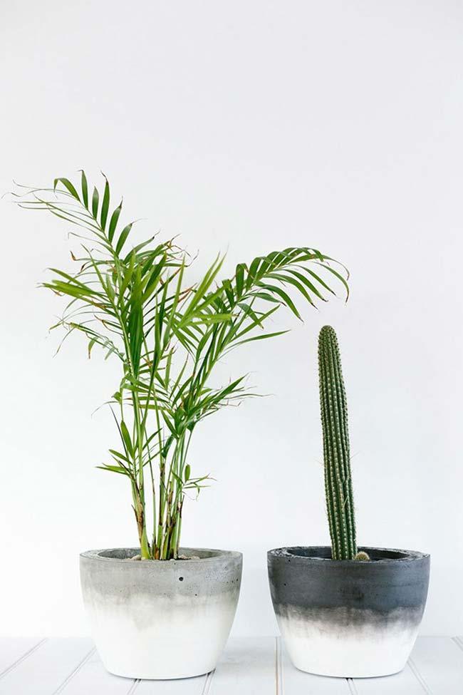 Cacto e mini bambu areca no vaso de cimento