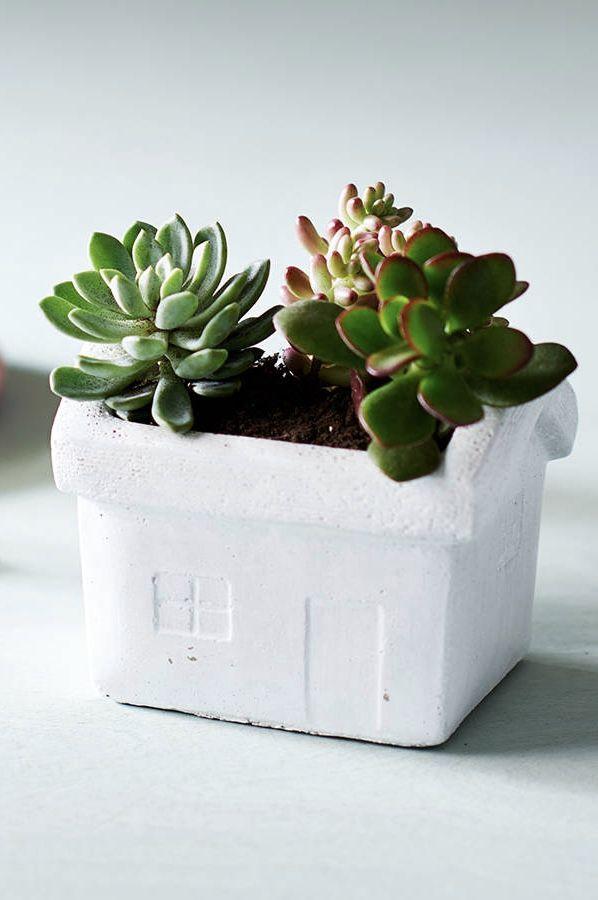 Vaso de cimento em formato de casinha