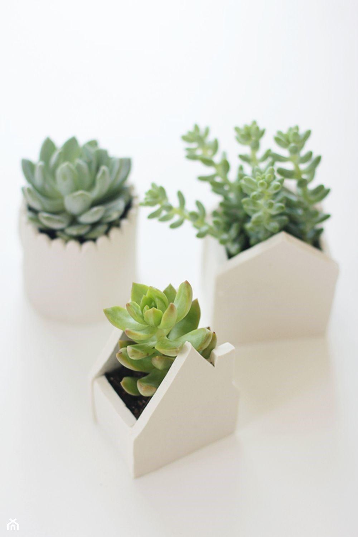 Vaso de cimento com suculentas