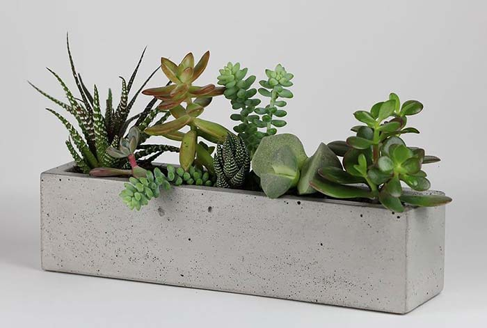 Vaso de cimento comprido para suculentas