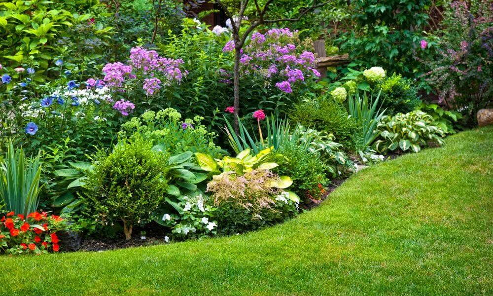 Plantas para jardim