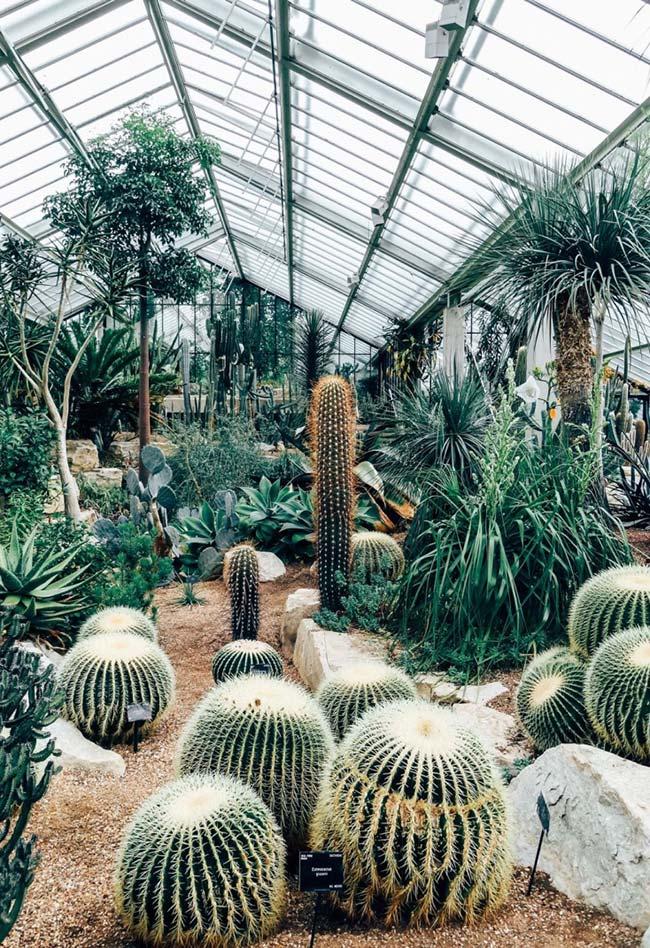 Telhado translúcido do jardim permite a passagem de luz e calor