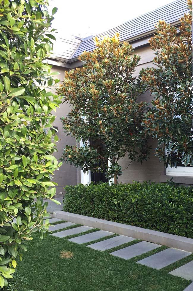 Ficus plantada na área externa da casa