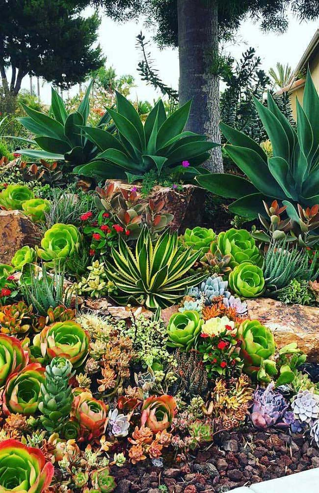 A grande variedade de suculentas permite a criação de jardins únicos