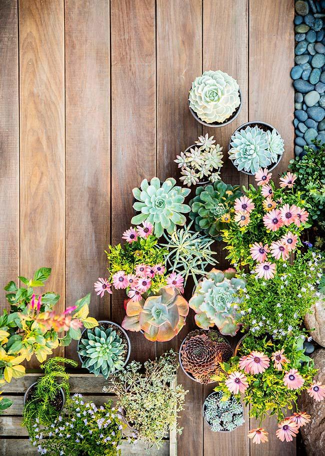 Plantadas nos vasos, as suculentas trazem a natureza para qualquer cantinho da casa