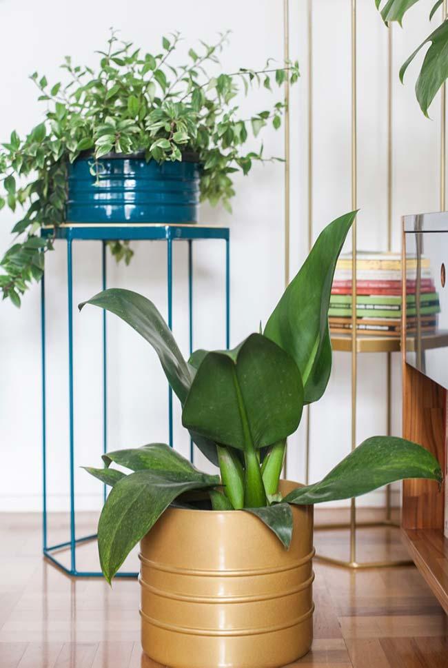 Pacovás são ótimas para serem cultivadas em vasos