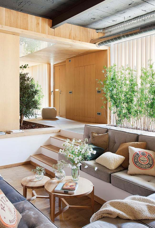 Bambu se desenvolve bem tanto em ambientes internos quanto externos