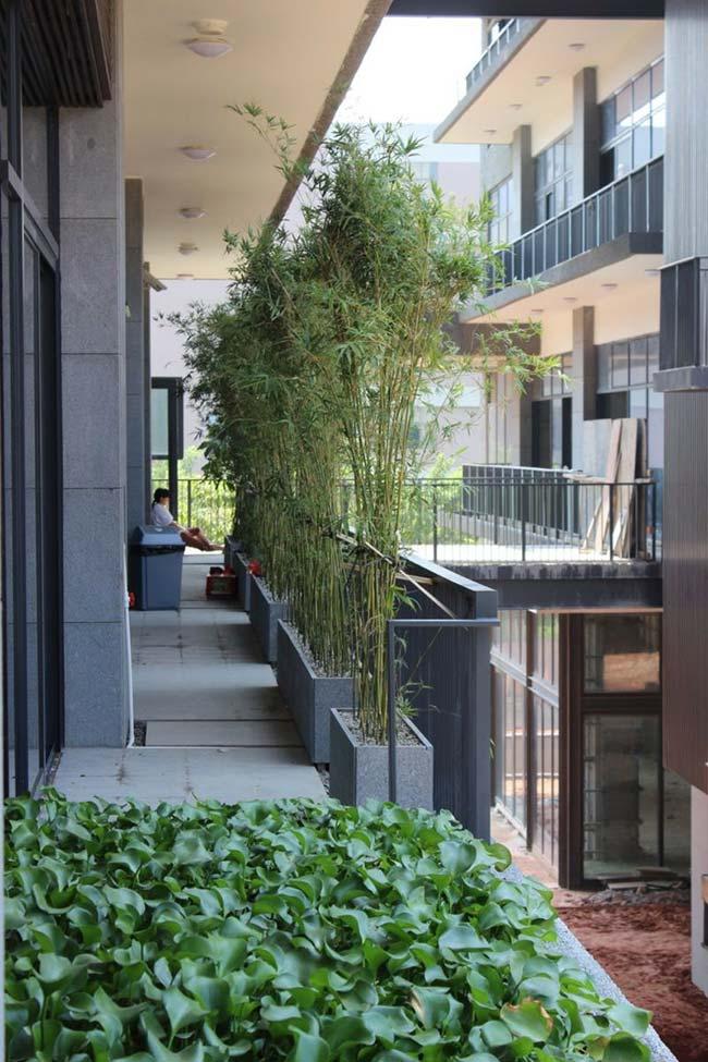 Canteiro de bambus na varanda traz privacidade aos moradores