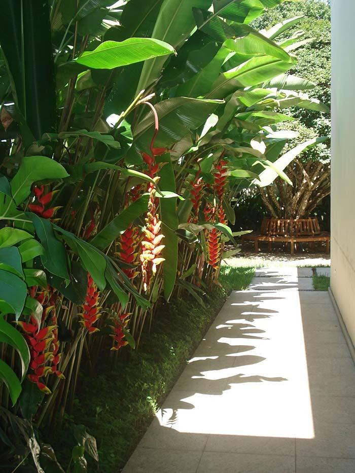 Jardim tropical formado de helicônias