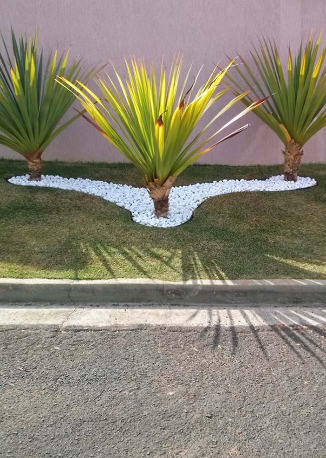 A luca é uma planta para jardim muito resistente