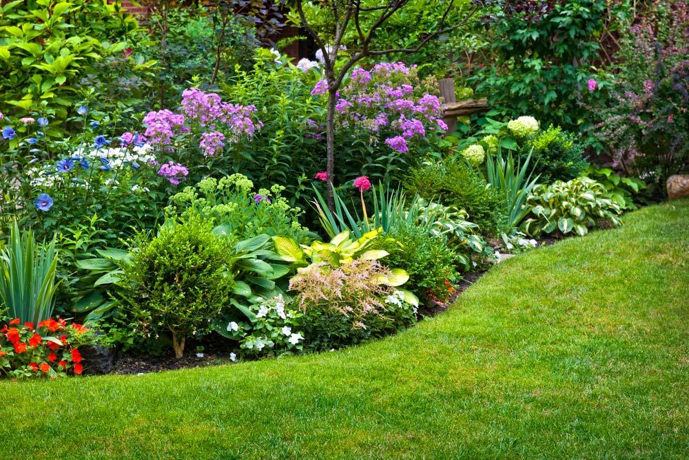 Plantas Para Jardim Conheça Espécies Tipos E 60 Fotos De