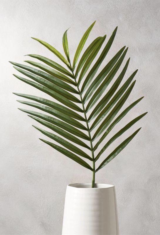 Uma parte da palmeira para dentro de casa