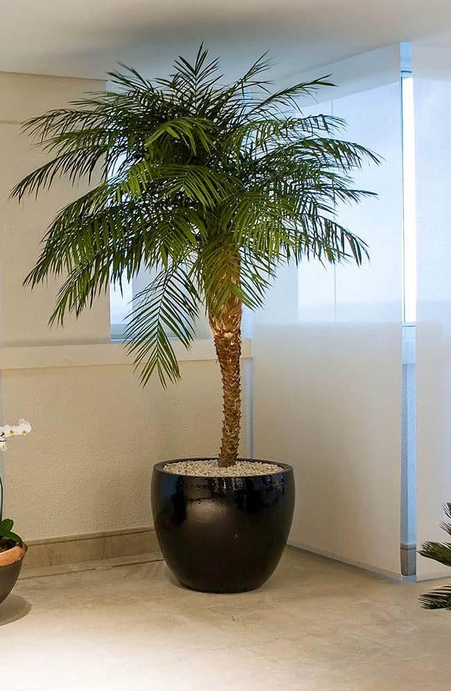 Planta com visual elegante e palmeira