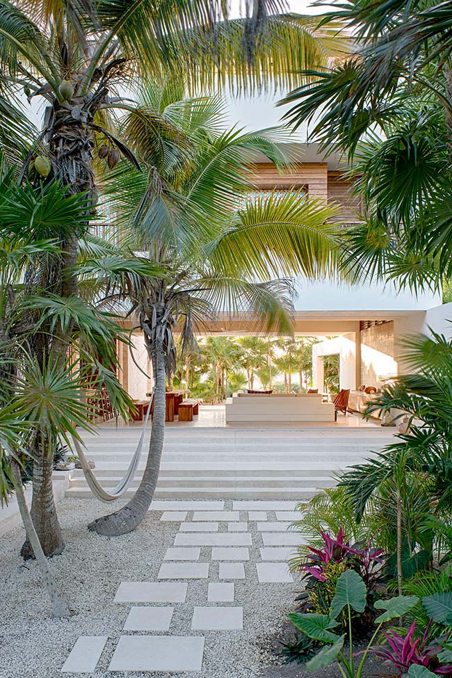 Areas externas são indicadas para plantar a palmeira Garrafa