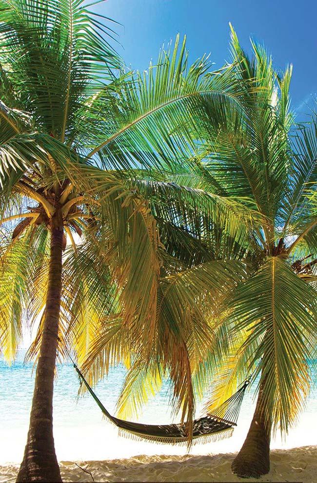 A palmeira garrafa é uma boa opção para ser cultivada em regiões litorâneas