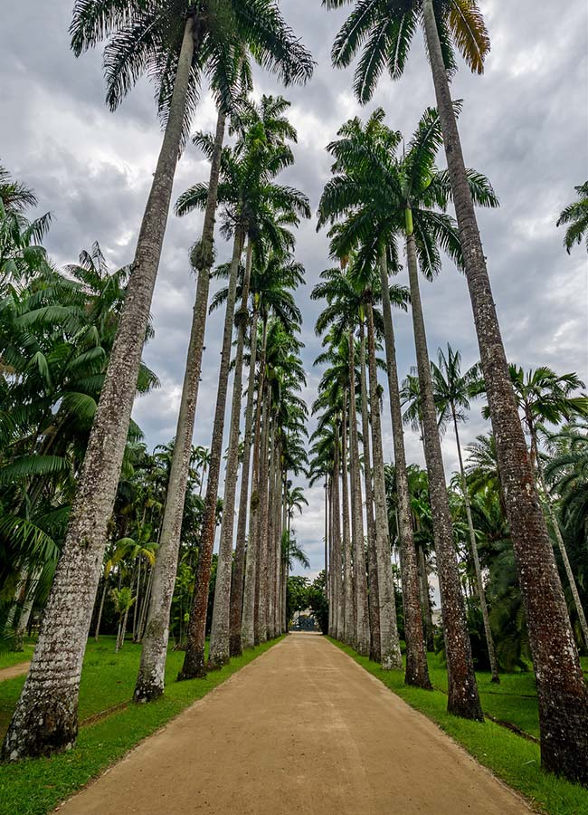 Palmeira exuberante e majestosa