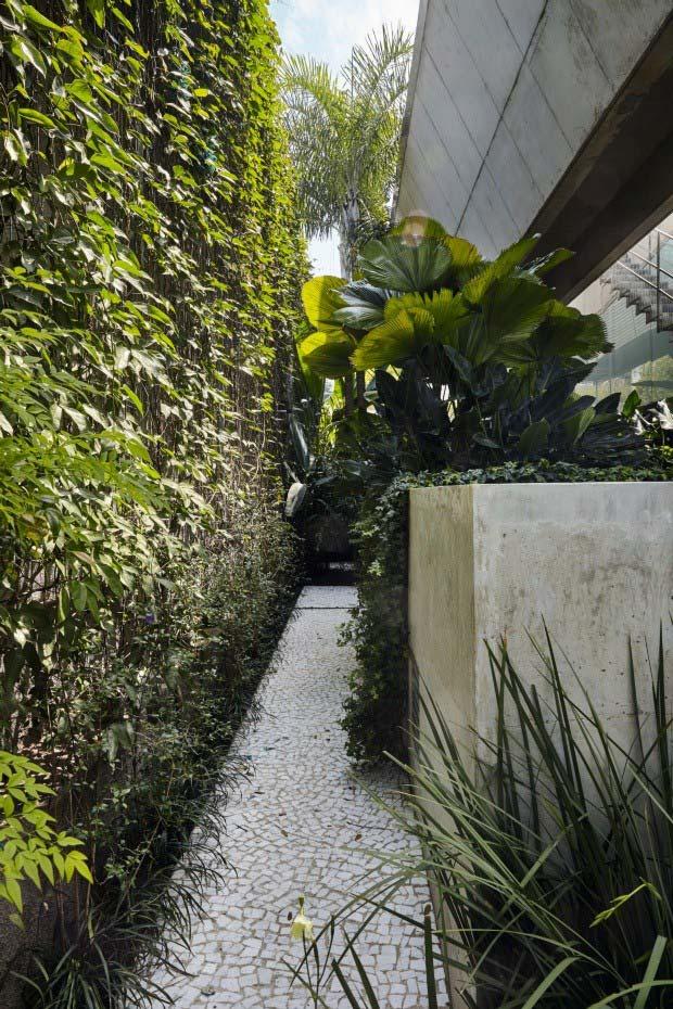 Palmeira leque ornamentando a área externa em conjunto com outras plantas