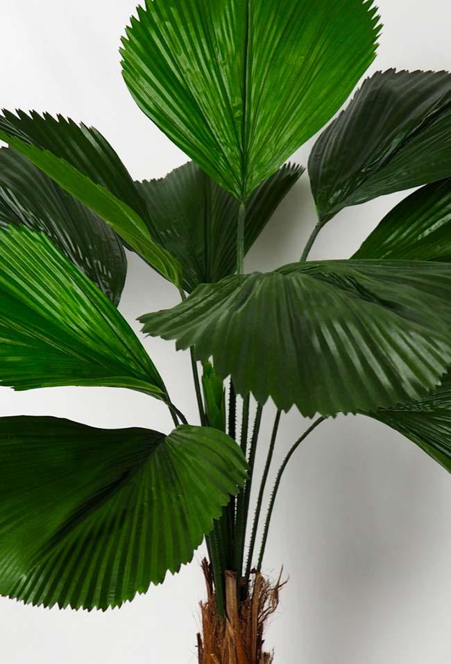 Verde das folhas da palmeira leque