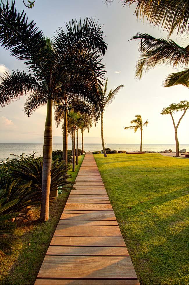 Palmeiras no litoral