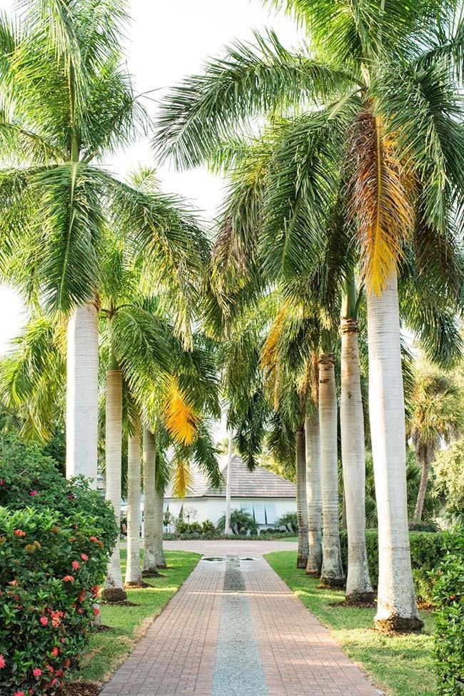 Esta palmeira tem folhas volumosas