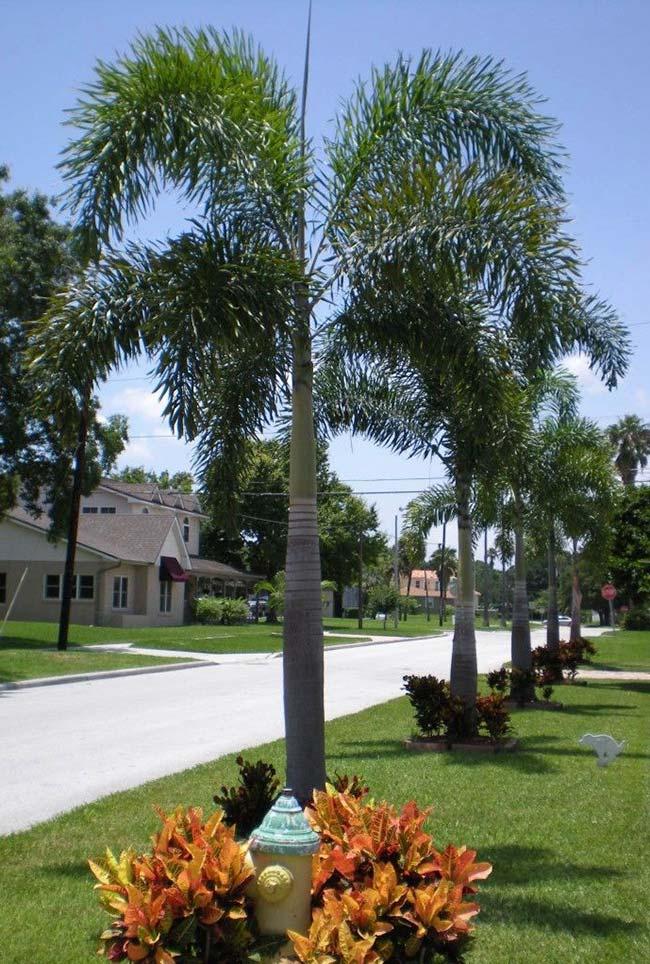 Base da palmeira ornamentada com espécies rasteiras e que apreciam meia sombra