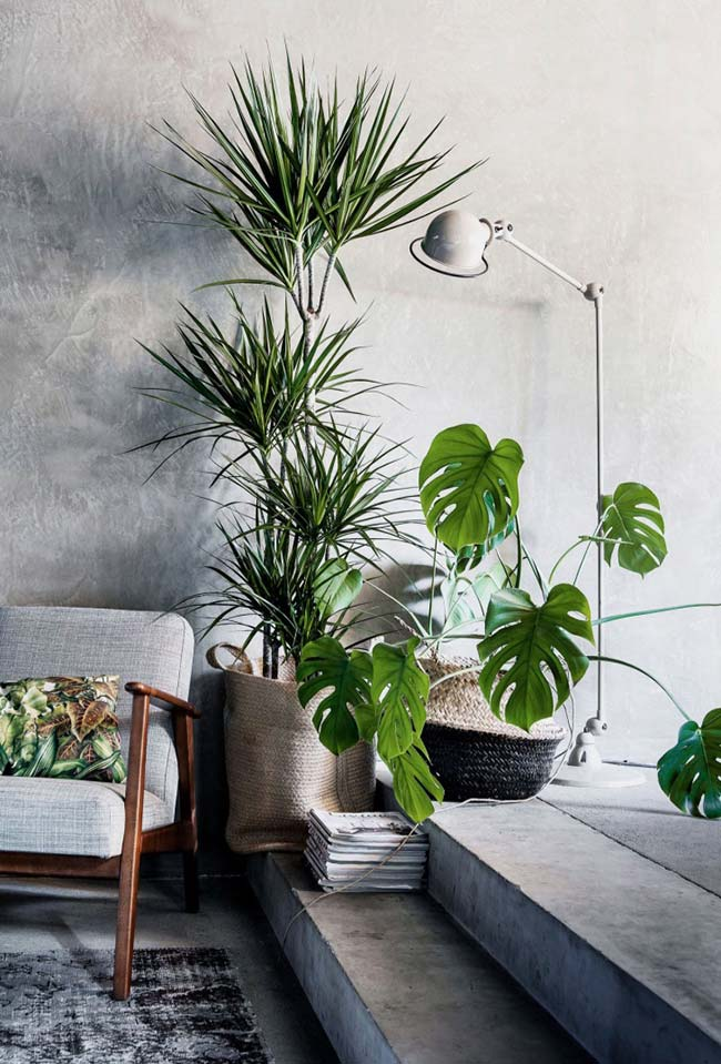 Palmeira e costela de adão na decoração da sala