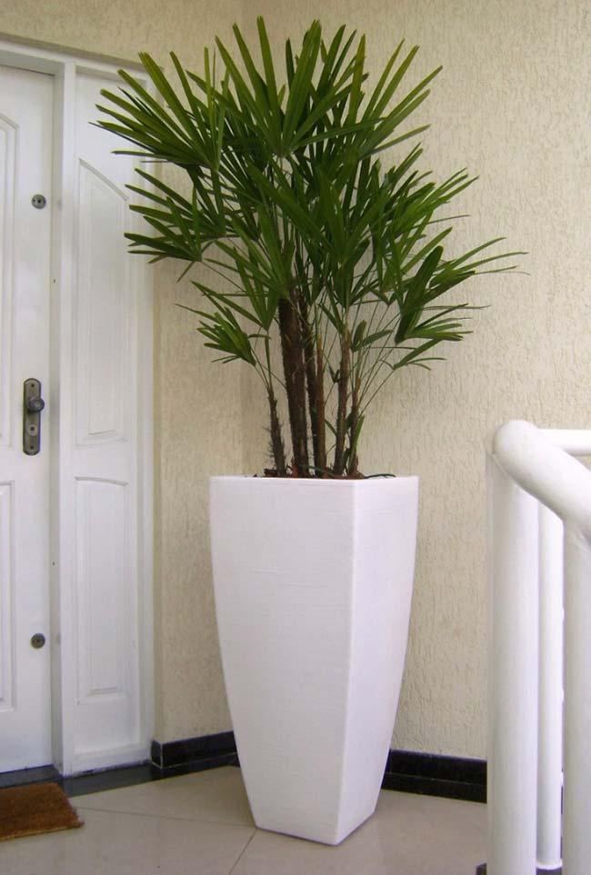 Estilo e elegância a planta com vaso