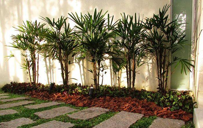 Tipos de palmeiras: conheça 10 espécies mais utilizadas em jardins