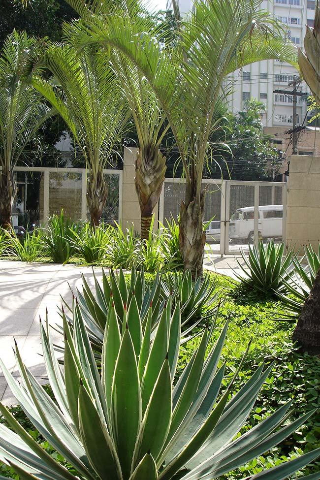 Caminho ondular com palmeiras triângulo