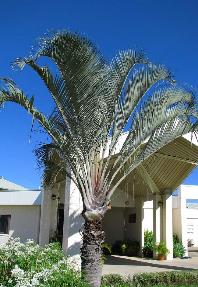 Palmeira na entrada de estabelecimento comercial