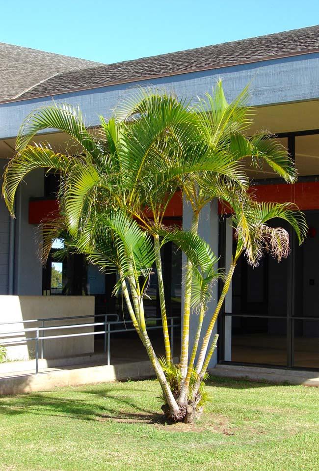 Palmeira no sol