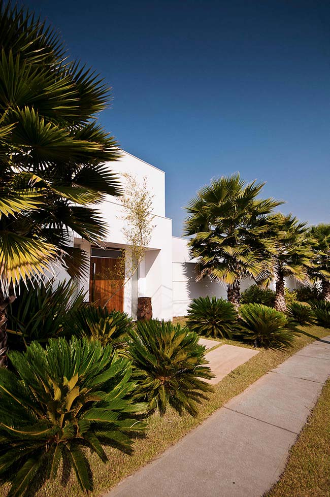 Palmeira com folhas grandes