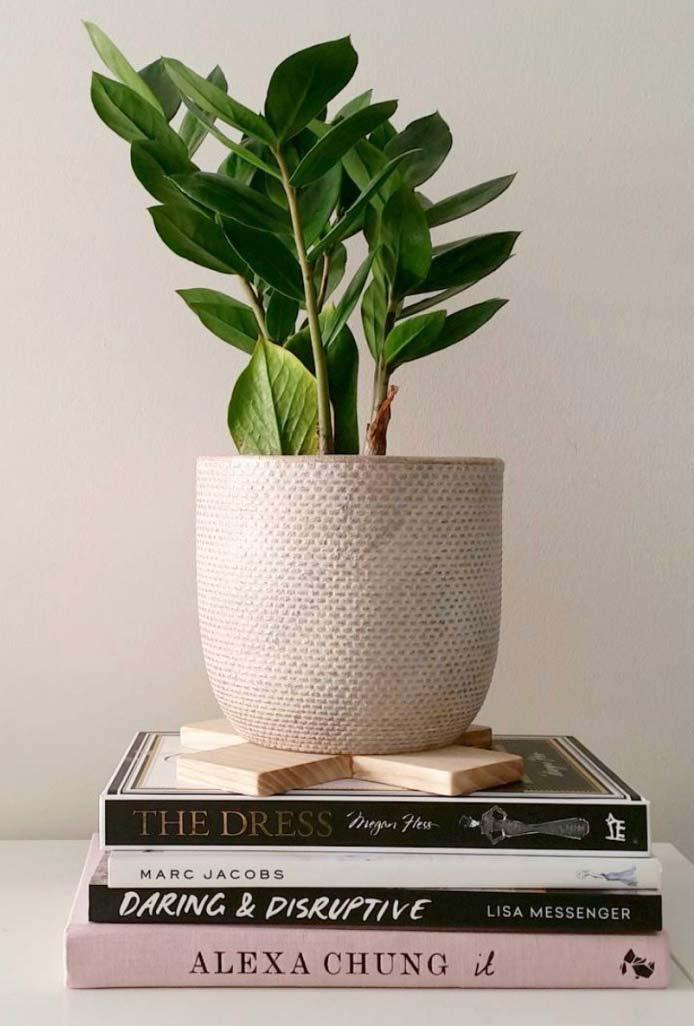 Vaso de zamioculca sobre livros