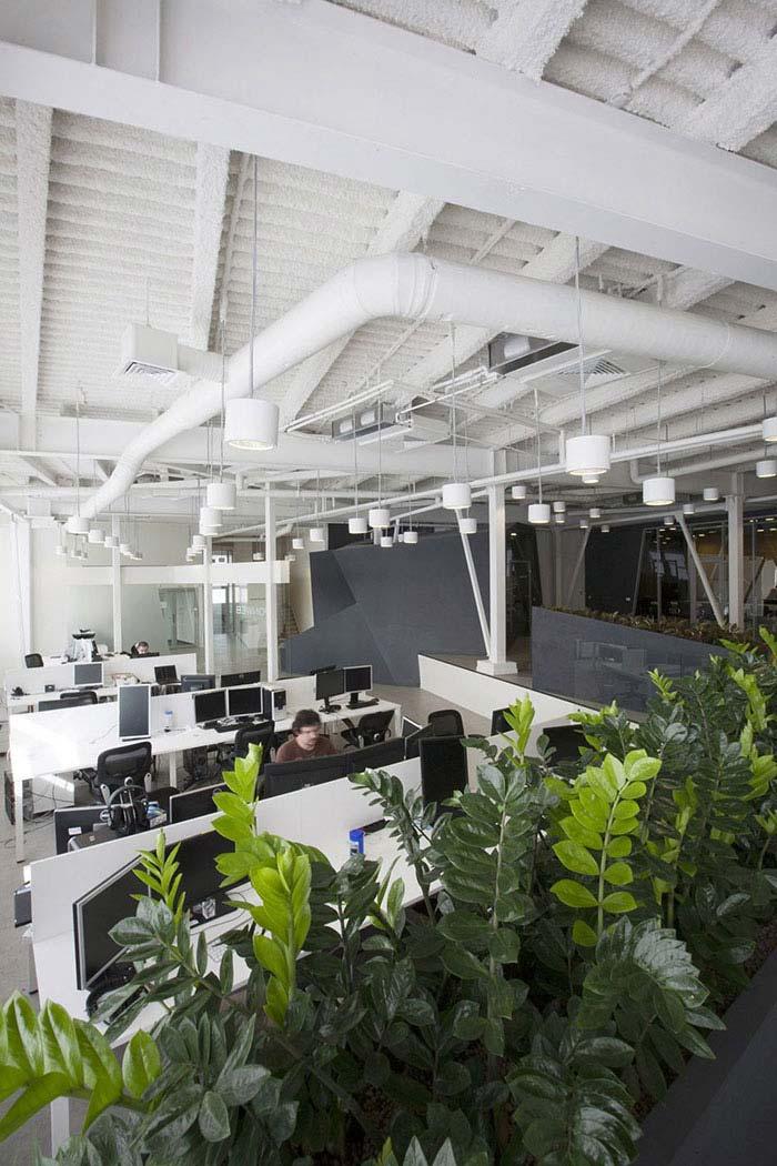 Canteiro de zamioculcas para refrescar e purificar o ar do escritório