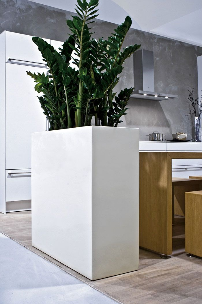 Vaso alto com zamioculcas marca área entre a cozinha e a sala de jantar