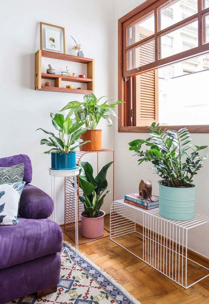 Mesmo que a zamioculca se desenvolva bem à sombra, a iluminação natural sempre confere mais vigor e vitalidade à planta
